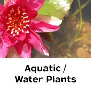 Aquatic / Water Plants