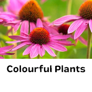 Colourful Plants
