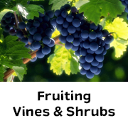 Fruiting Vines & Shrubs