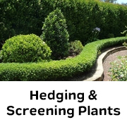 Hedging & Screening Plants