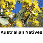 Australian Natives