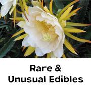 Rare & Unusual Edibles