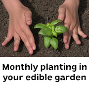 Edibles to plant in Melbourne this month