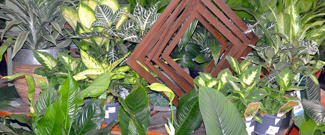 Growing Indoor Plants Successfully