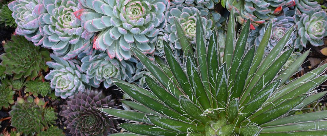 Succulents Indoors