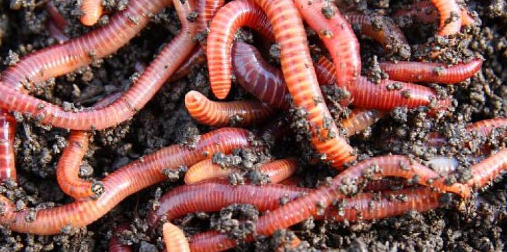 worm farms bulleen art garden