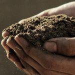 Healthy soil is easy