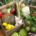Edible General Info