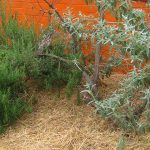Mulching for a Healthy Garden