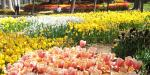 Bulbs & Perennials