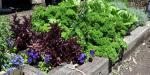 Vegie Garden Overview